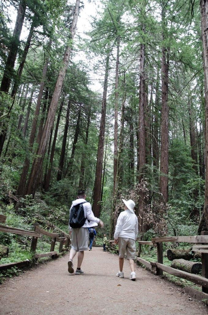Muir Woods Edits-28