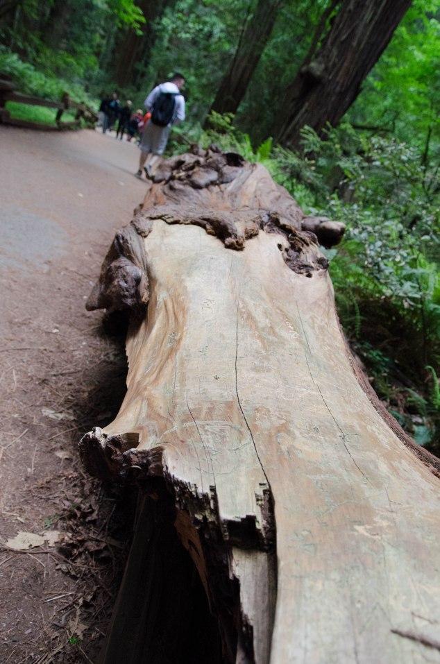 Muir Woods Edits-37