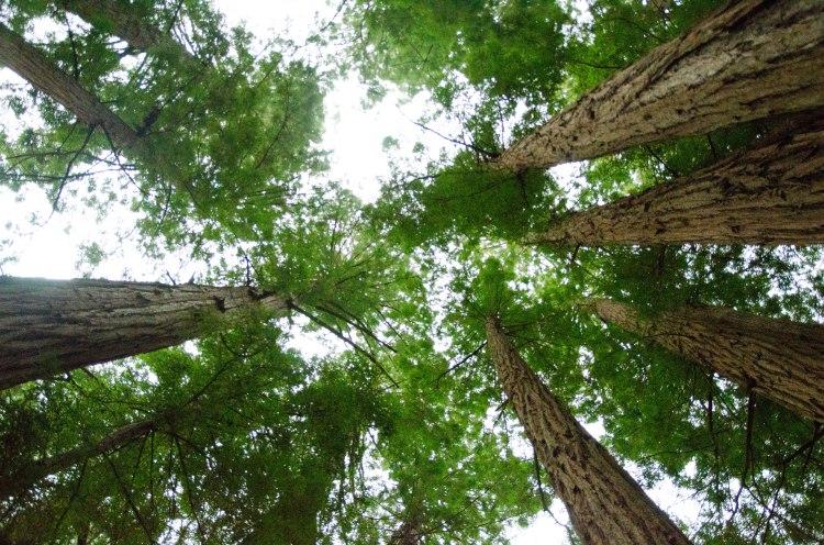 Muir Woods Edits-38