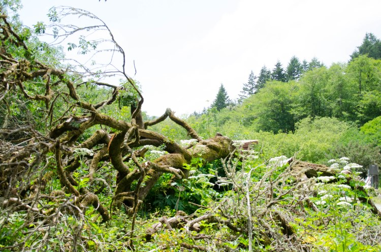 Muir Woods Edits-52