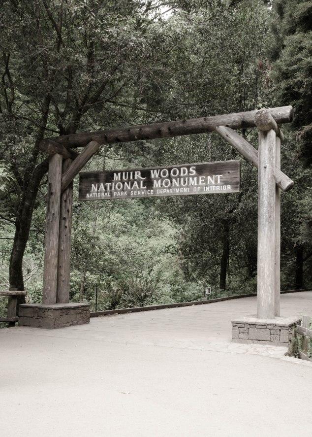 Muir Woods Edits-6
