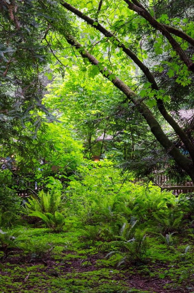 Muir Woods Edits-8