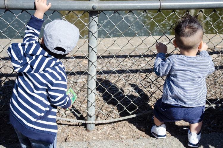 Oakland Zoo-2