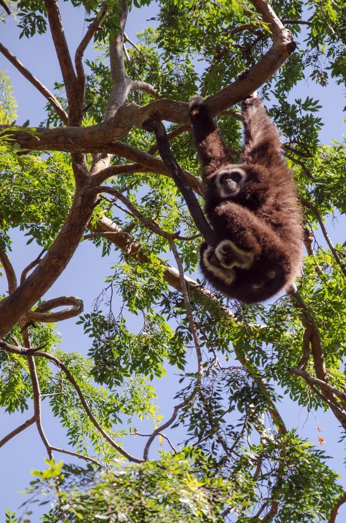 Oakland Zoo-20