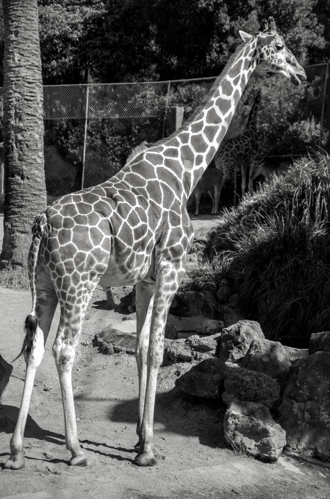 Oakland Zoo-4