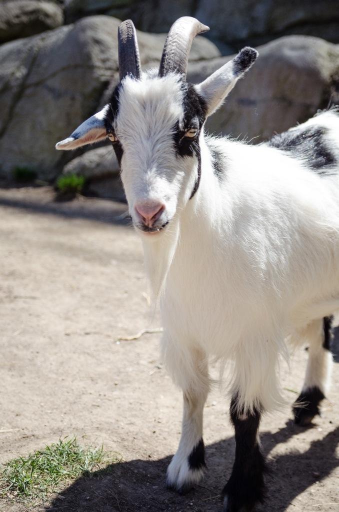 Oakland Zoo-44