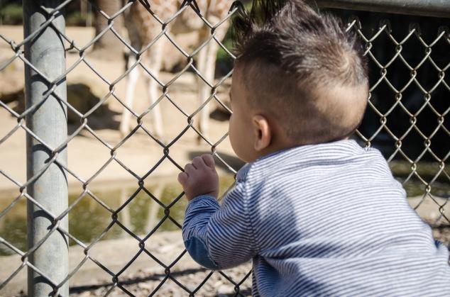 Oakland Zoo-5