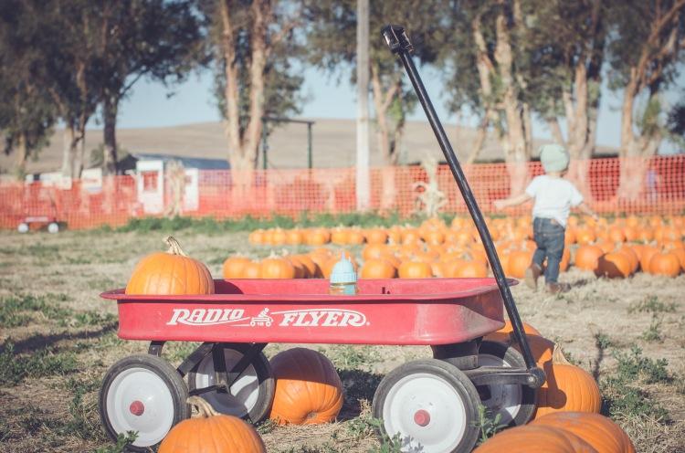 Pumpkin Patch '15-10