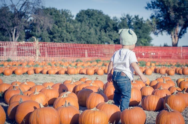 Pumpkin Patch '15-12