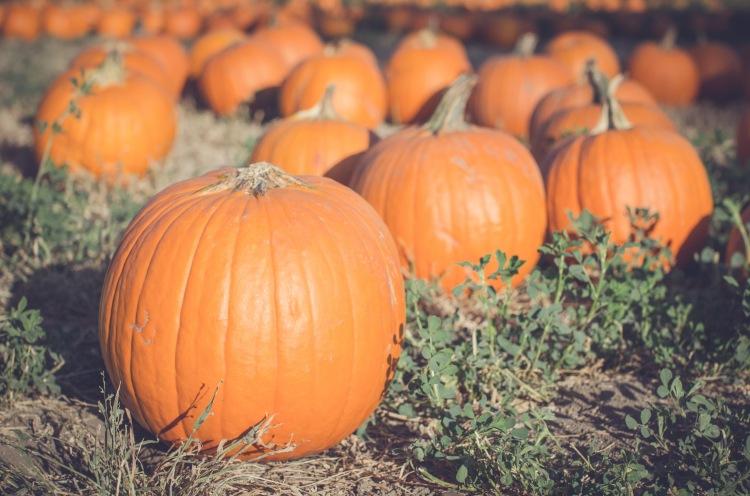 Pumpkin Patch '15-16