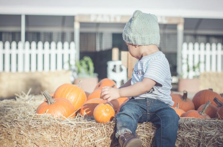 Pumpkin Patch '15-18