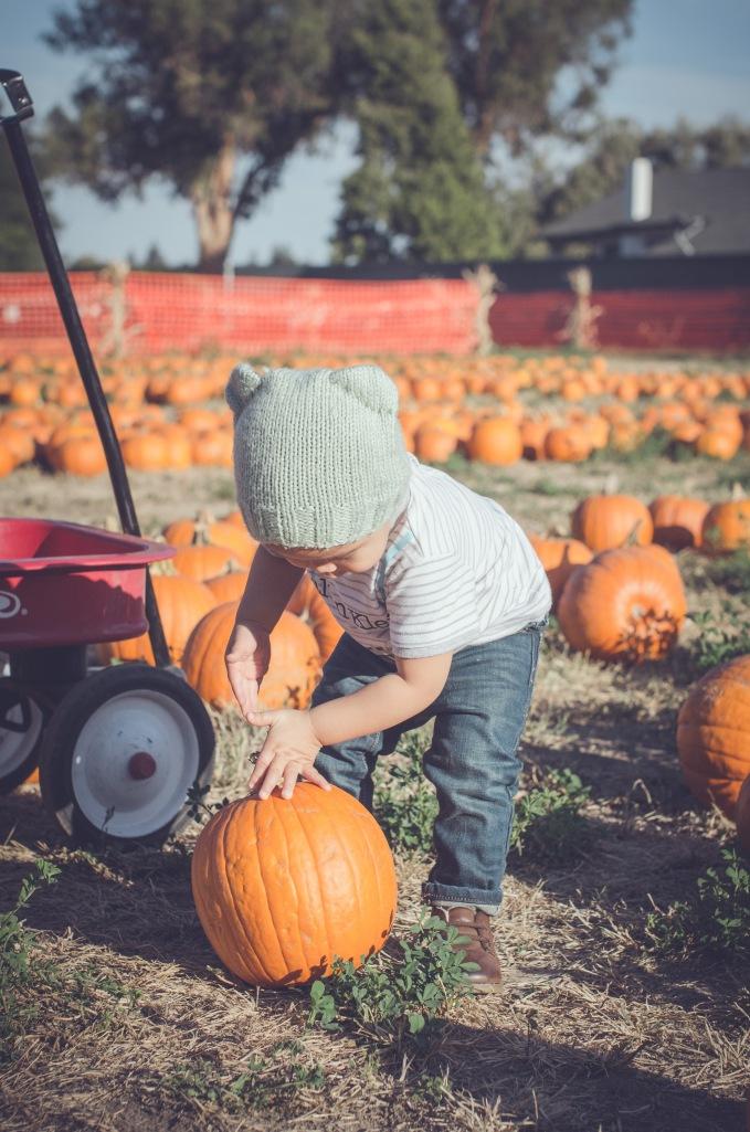 Pumpkin Patch '15-5