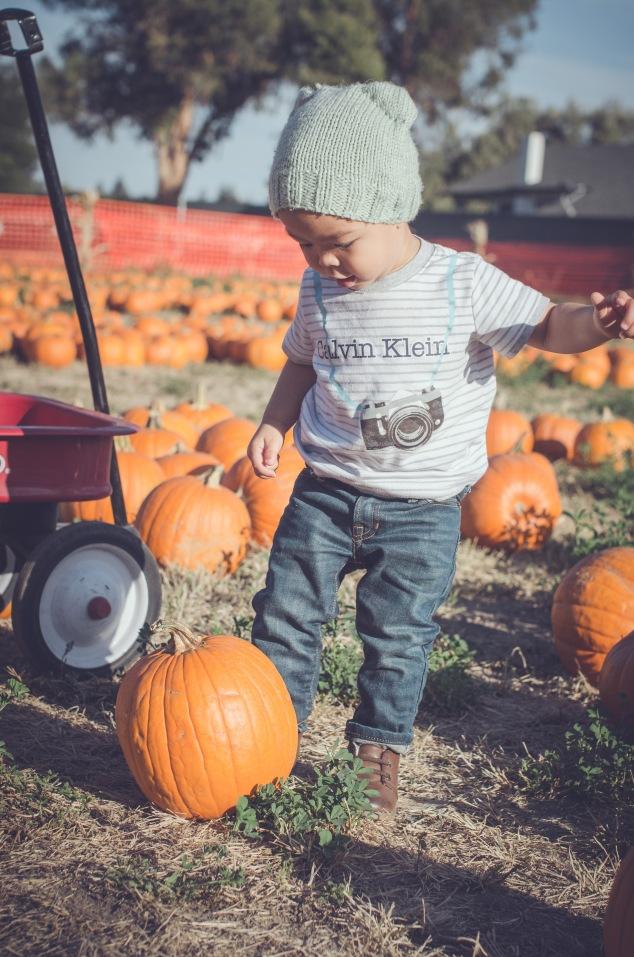 Pumpkin Patch '15-6