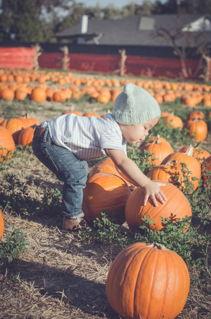 Pumpkin Patch '15-8