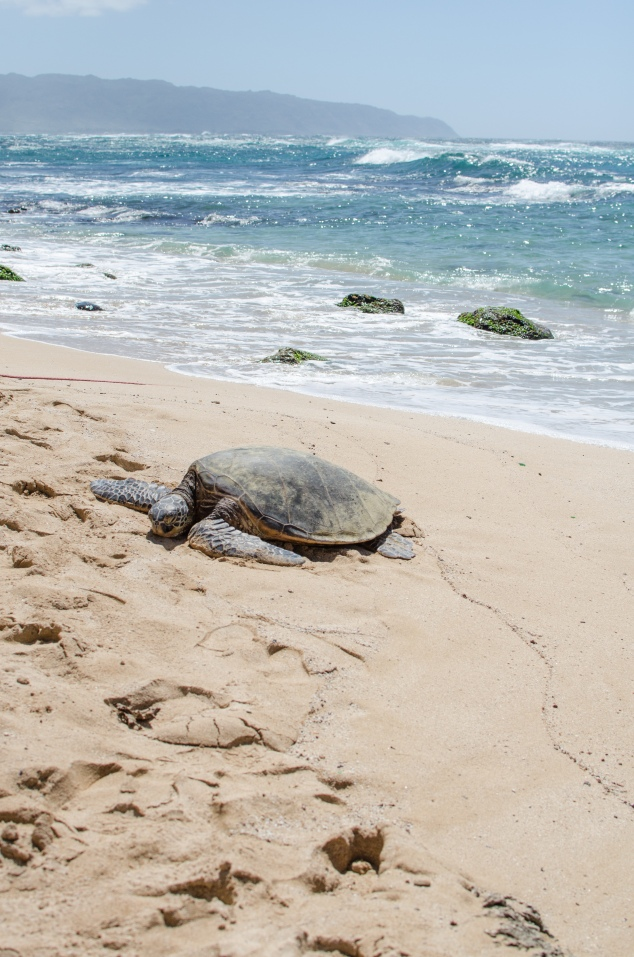 Hawaii '16-76