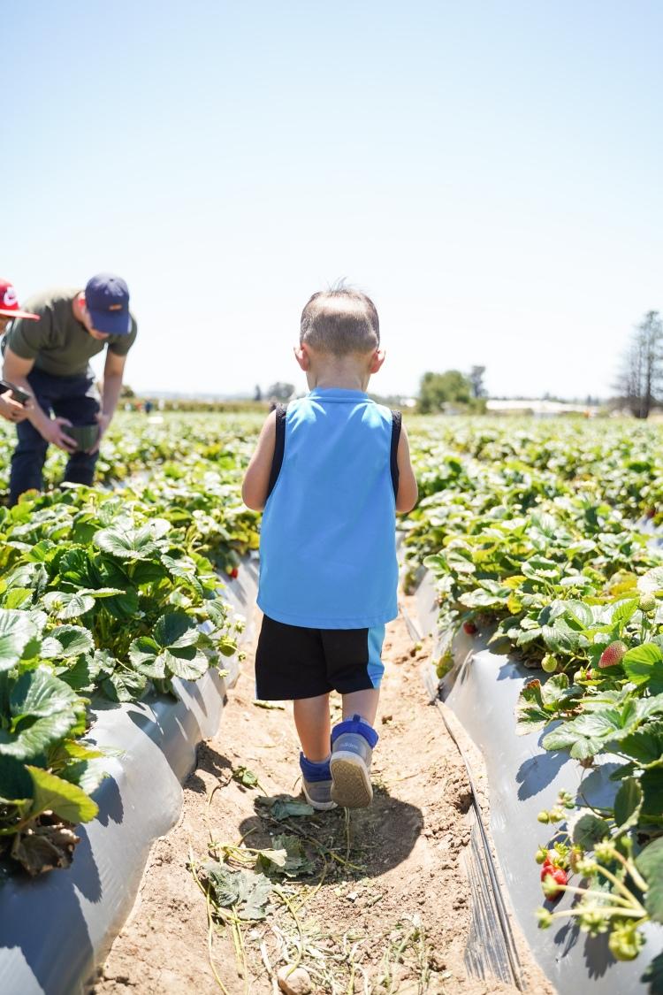 Strawberry Picking '19-10