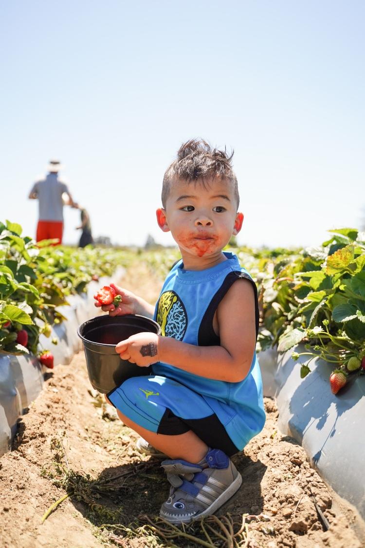Strawberry Picking '19-16