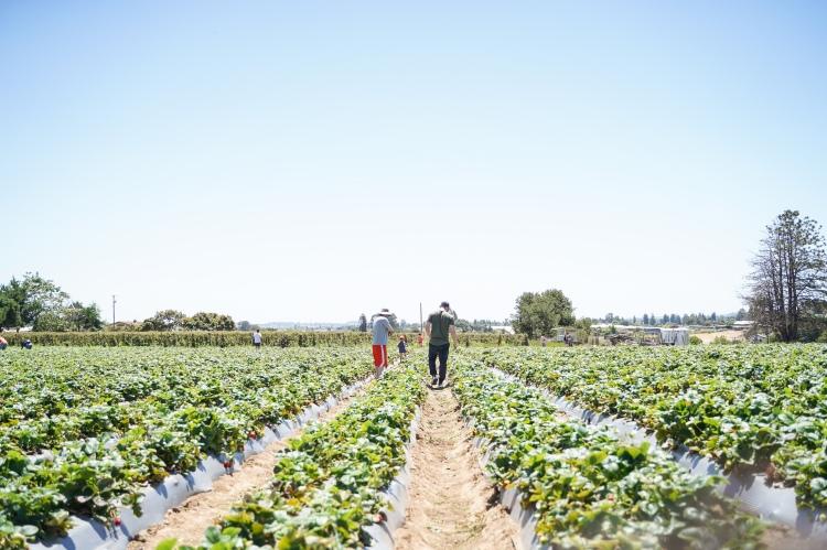 Strawberry Picking '19-18