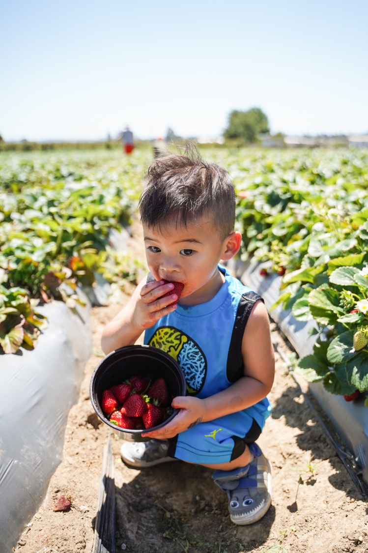 Strawberry Picking '19-19