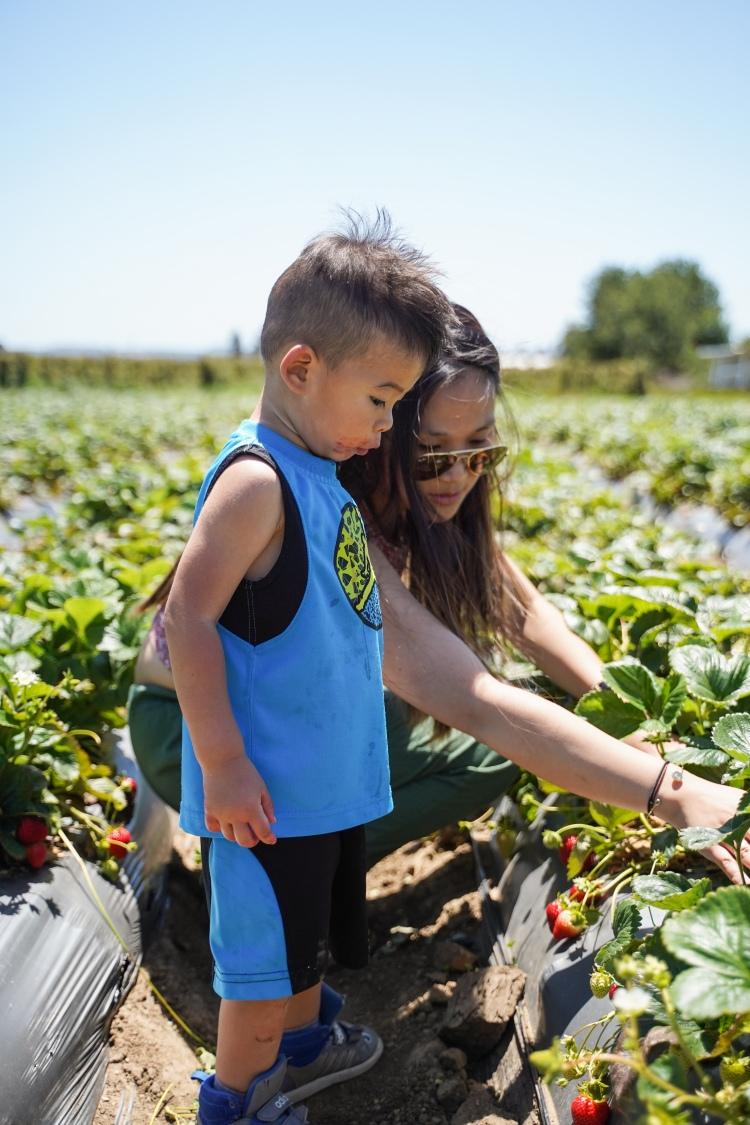 Strawberry Picking '19-21