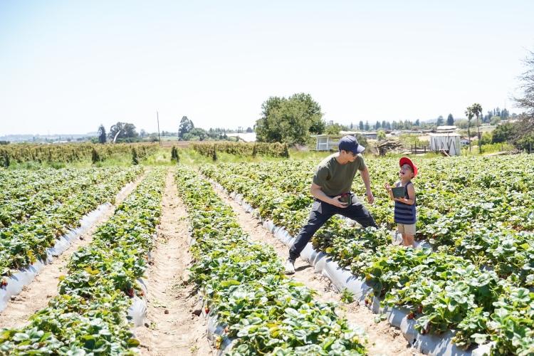 Strawberry Picking '19-23