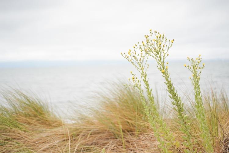Alameda Beach '19-11